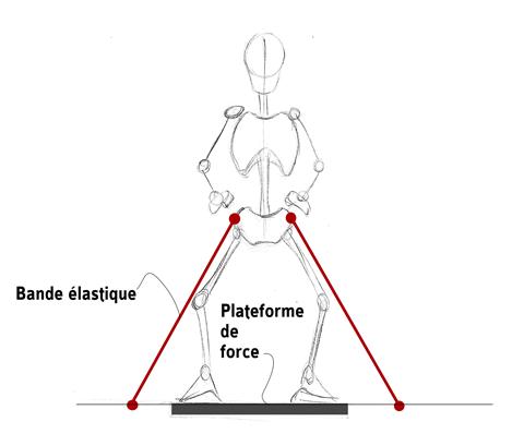 Sciences du Sport   Les bandes élastiques   De la science à la pratique 5131aecf91a