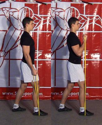 Exercices Sci-Sport   Flexion des bras avec bande élastique